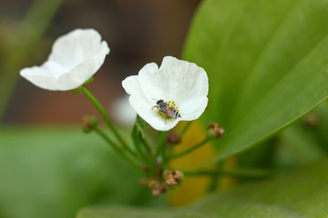 a flower and blur background