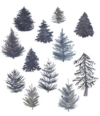Watercolor painting set of fir trees isolated on white