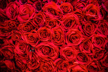 Bouquet of flowers: fresh red roses  for backgrounds