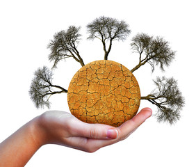 Dry planet with cracked soil and barren trees in hand isolated on white background. Global warming concept.