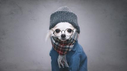 チワワの冬服スタイル