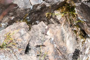 lizard, beautiful animal in a stone, small reptile