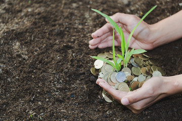 Palms with a tree growing from pile of coins, hands holding a tree growing on coins, business ethics,  good governance, Money growth Saving money.