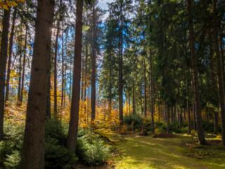 black forest in autumn