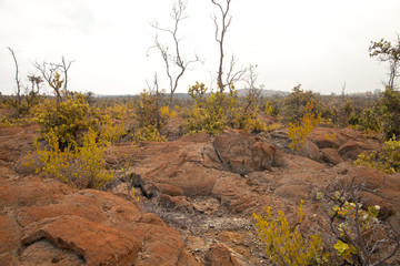 Old Hawaiian Lava Field Being Transformed