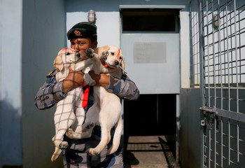 A member of the Armed Police Force kisses a puppy after offering prayers during the dog festival as part of Tihar in Kathmandu