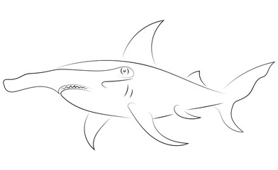 Black line hammerhead sharks on white background. Hand drawing vector graphic fish. Sketch style. Animal illustration.