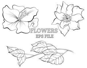 Line drawn botanical sketch with flowers