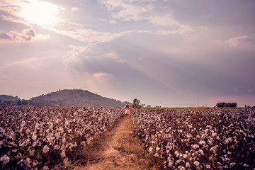 Beautiful little girl with long hair and in pink dress standing in cotton field with arms outstretched