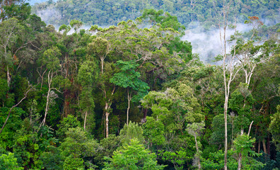 Tropical forest after rain