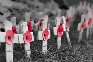 Remembrance poppies on wooden crosses, to commemorate the loss of servicemen in world wars and conflicts. Colour pop image, red poppies on a black and white background.