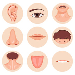 Human nose, ear, mouth mustache hair and eye neck back tongue tooth set, Vector illustration