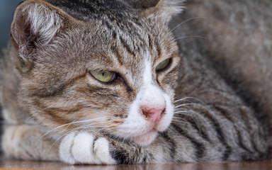 Cats are cute pets and like to be close to the owner. But the cat's deep habit is bad.