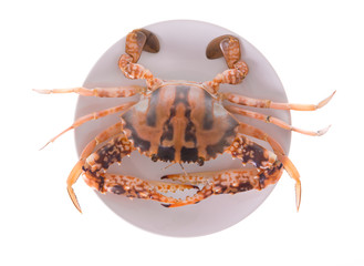 fresh crab on a plate isolated on white background