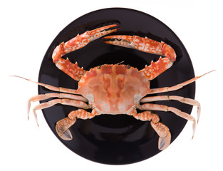 cooked crab prepared on plate isolated on white background