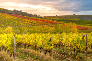 Fotobehang Wijngaard Chianti region, Tuscany. Vineyards at sunset in autumn. Central Italy