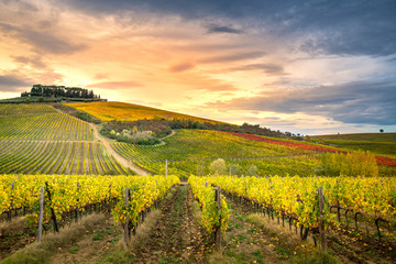 Foto auf Acrylglas Melone Chianti region, Tuscany. Vineyards at sunset in autumn. Central Italy