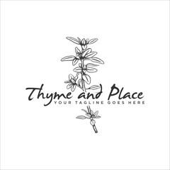 Handrawn herb thyme vector illustration