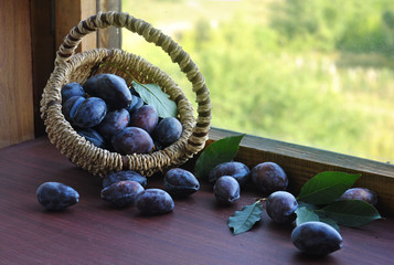 Ripe blue plums in a basket and an old wooden window. Still life