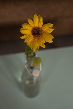 Sunflower in vase at home