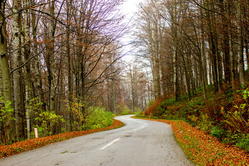 Beautiful view of mountain road through forest in autumn. Mountain Goc near the Vrnjacka Banja in Serbia