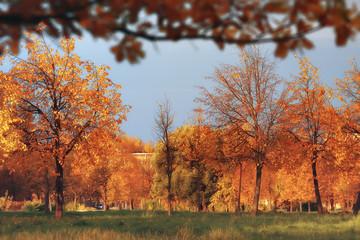 Foto op Canvas Landschappen autumn landscape / yellow trees in autumn park, bright orange forest