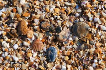 shell beach pattern