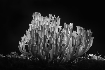 coral mushroom / macro mushroom beautiful nature photo forest
