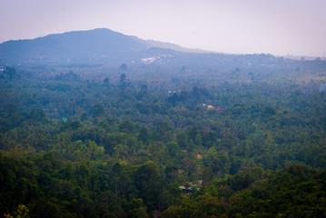 Jungle of Koh Phangan, Thailand