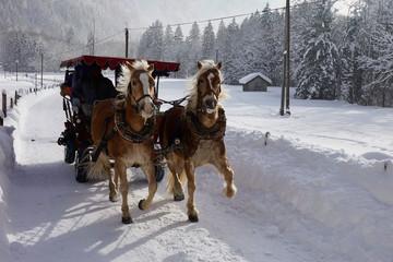 Pferdeschlittenfahrt durch das obere Trettachtal