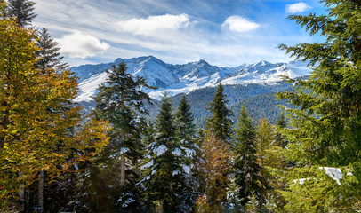 fir trees in french pyrenees mountains with Pic du Midi de Bigorre in background