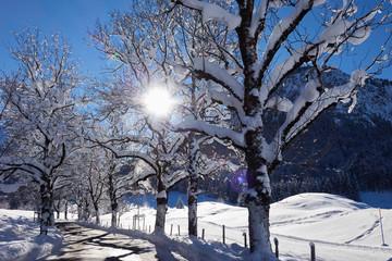 Allee mit verschneiten Bergahornbäumen