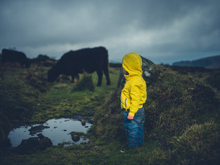 Toddler looking at cow on the moor