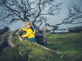Toddler by fallen tree on the moor