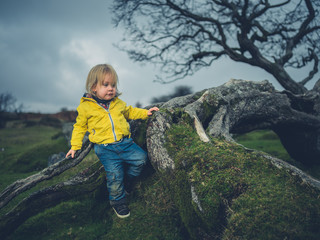 Toddler climbing tree on the moor