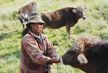 Typical aymara woman with bulls in the countryside.