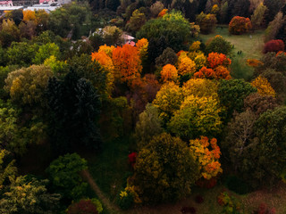 Autumn Park with many different trees Top view air drone