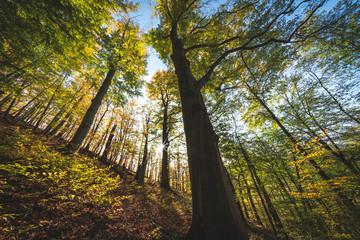 dicker Baum
