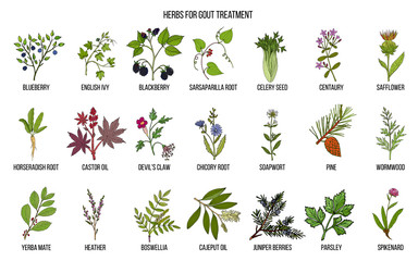 Collection of natural herbs for gout treatment