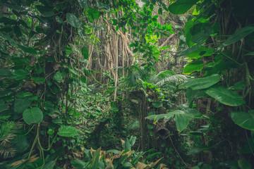 inside jungle , in rainforest / tropical forest landscape
