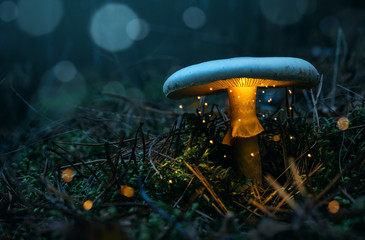 Papiers peints Forets Fairy, glowing mushroom in the misty forest at night with copy space