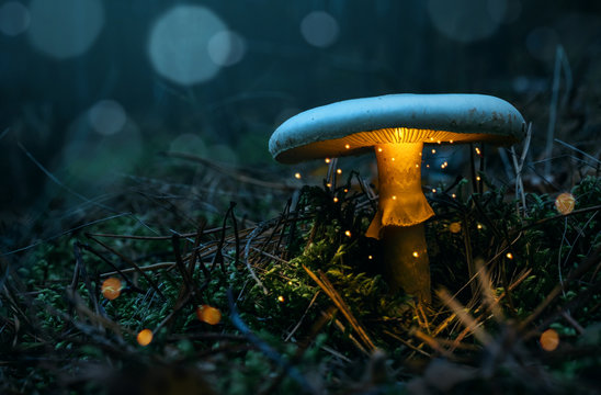 Fairy, glowing mushroom in the misty forest at night with copy space