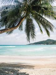 Green palm on tropical beach