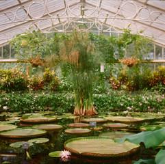 A beautiful glasshouse