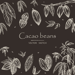 Vector illustration. Sketched hand drawn cacao beans, cacao tree leafs and branches. Chalk style vector set. Element of design.