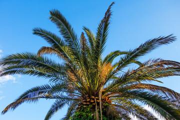 palm tree on a blue sky