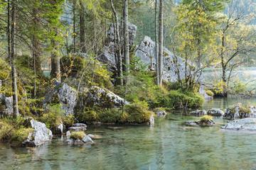 Zauberwald am Hintersee in Bayern mit Felsblöcken aus einem Bergsturz. Ramsau bei Berchtesgaden