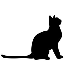 isolated silhouette cat sitting