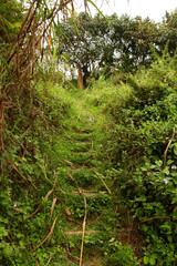 Jungle Trail Hillside Steps