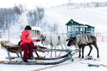 Girl riding reindeer sleigh in Finland in Lapland in winter